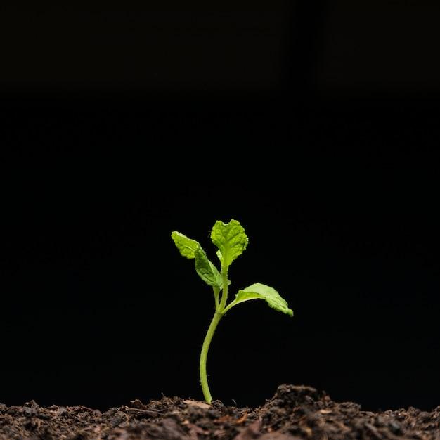 Natura morta di semenzali crescenti Foto Gratuite