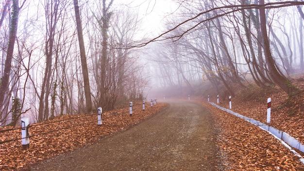 Nebbia nella foresta Foto Premium