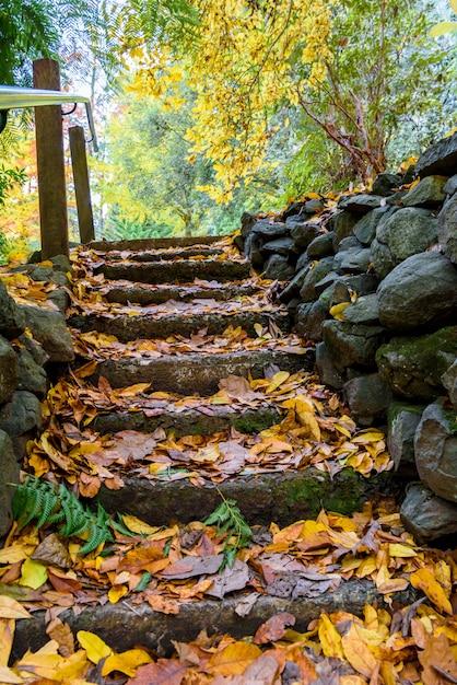 Nel parco autunnale, i gradini rocciosi sono coperti da foglie gialle Foto Gratuite