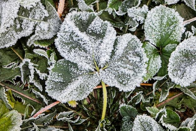 Neve e gelo sulle foglie d'autunno. concetto di inverno Foto Premium