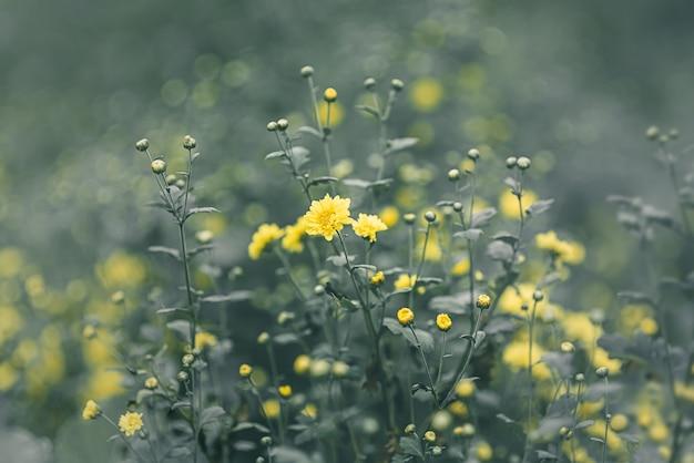 Offuscata e morbida di piccoli fiori gialli e foglie verdi colore della natura per lo sfondo Foto Premium
