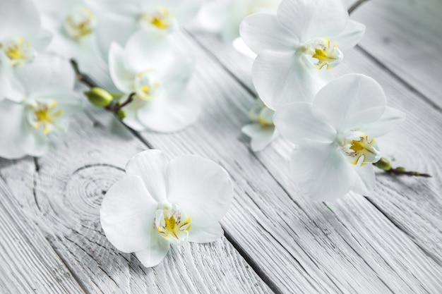 Orchidea bianca su fondo di legno Foto Gratuite
