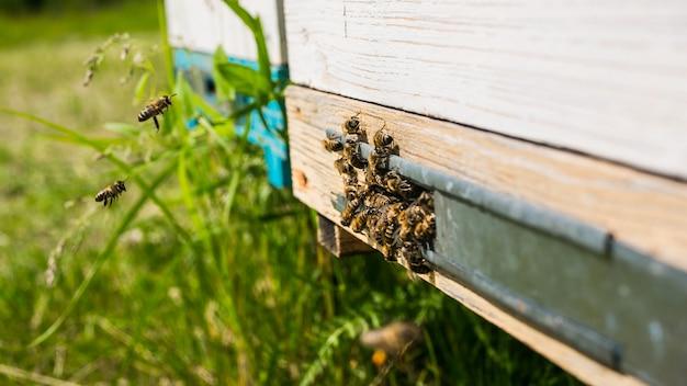 Orticaria in un apiario con api che volano verso le piattaforme di atterraggio in un giardino verde Foto Premium
