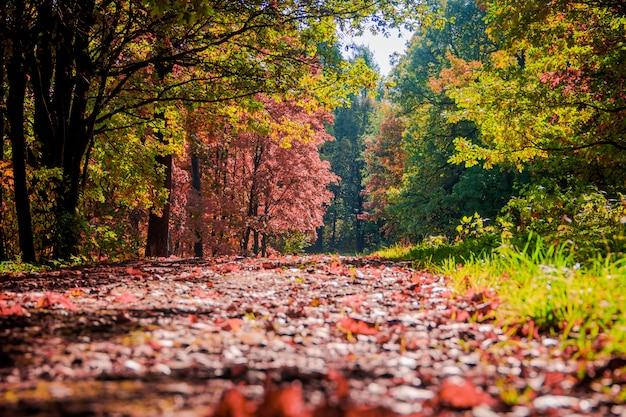 Paesaggio autunnale del parco. Foto Premium