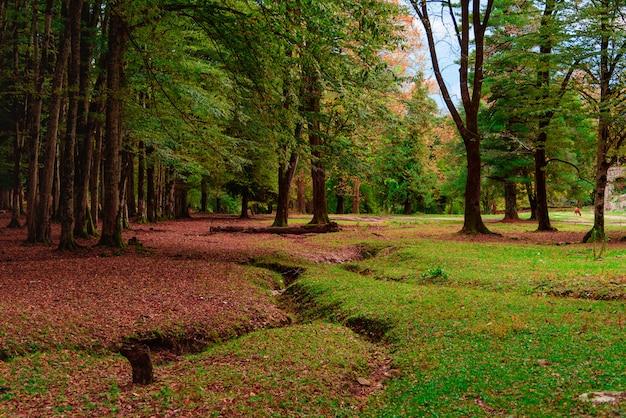 Paesaggio autunnale natura autunnale scena d'autunno parco coperto da fogliame giallo. sfondo tranquillo Foto Premium