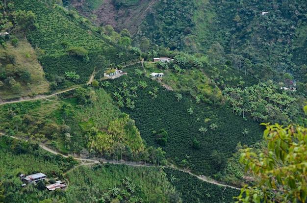 Paesaggio con fattorie di caffè. colombia. Foto Premium