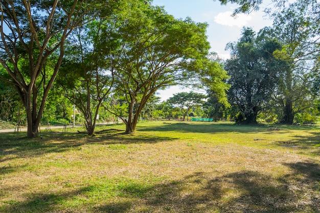 Paesaggio del campo di erba e del parco pubblico dell'ambiente verde in pai, tailandia Foto Premium