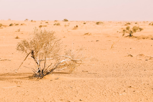 Paesaggio del deserto in marocco Foto Gratuite