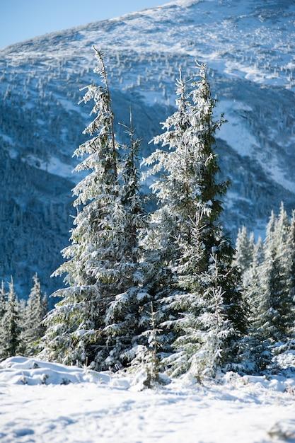 Paesaggio innevato nelle montagne della foresta di conifere Foto Premium