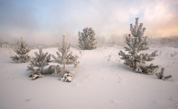 Paesaggio invernale all'alba, abete coperto di gelo Foto Premium