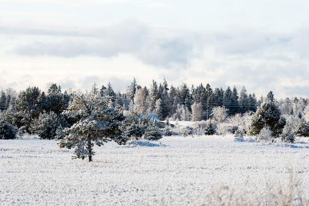 Paesaggio invernale di alberi glassati contro un cielo blu in una mattina soleggiata Foto Premium