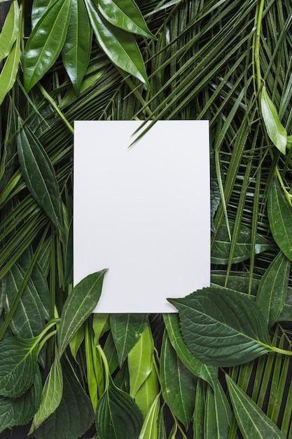 Pagina bianca vuota circondata con foglie verdi Foto Gratuite