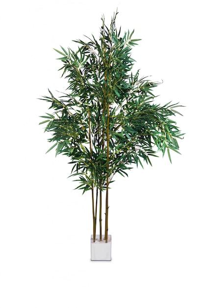 Palma areca isolato su sfondo bianco Foto Premium