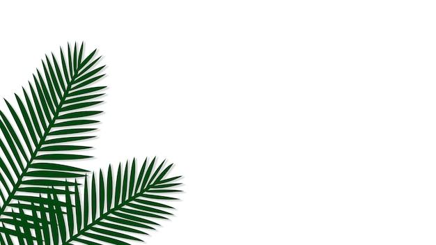 Palma di areca verde Foto Gratuite