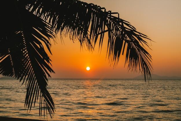 Palma di cocco con l 39 alba sul mare scaricare foto gratis - Palma di cocco ...