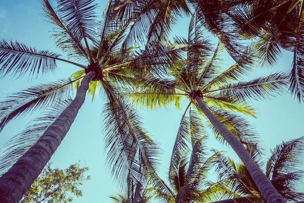 Palma di cocco scaricare foto gratis - Palma di cocco ...