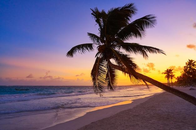 Palma di tramonto della spiaggia di tulum riviera maya Foto Premium