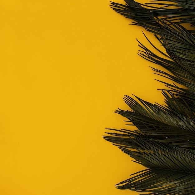 Palma tropicale del confine su giallo con copyspace Foto Gratuite