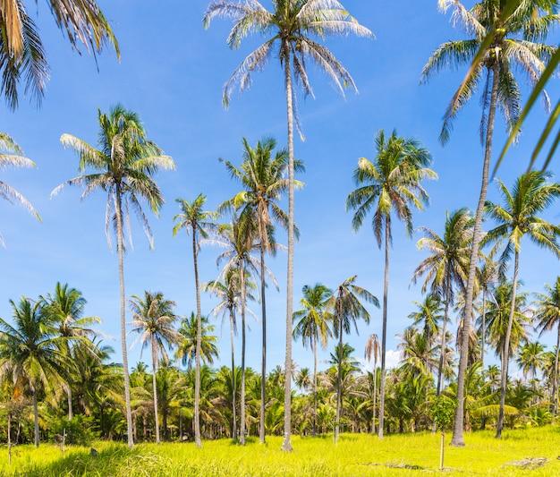 Palme alte su un'isola selvaggia della tailandia Foto Premium