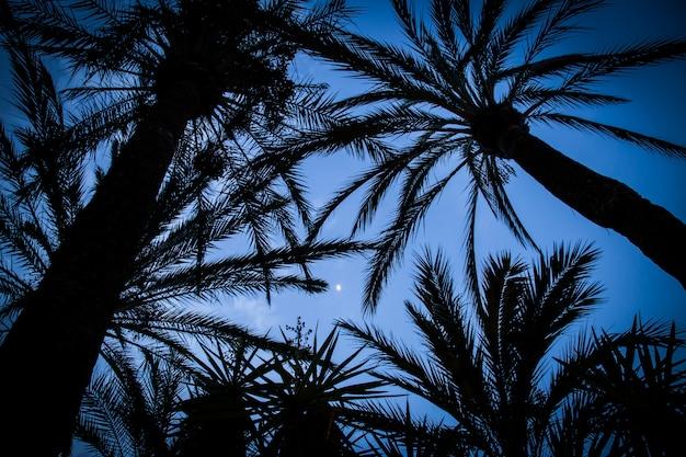 Palme che si stagliano contro il cielo della sera Foto Premium