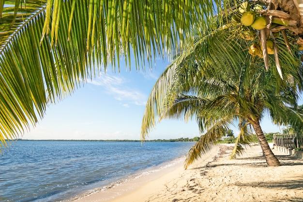Palme da spiaggia e mare turchese a playa larga a cuba Foto Premium