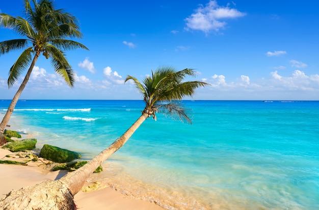 Palme della spiaggia di playa del carmen messico Foto Premium