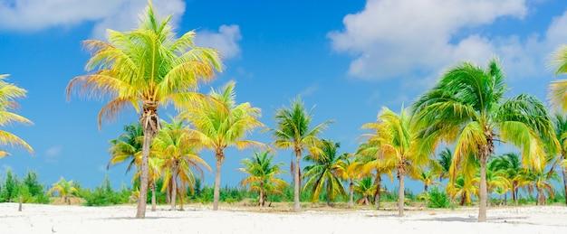 Palme sulla spiaggia di sabbia bianca. playa sirena. cayo largo. cuba. Foto Premium