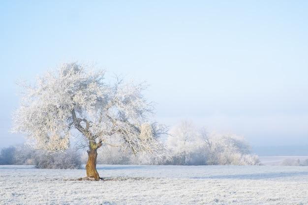 Panoramica di un albero isolato coperto di neve in una zona nevosa. proprio come una fiaba Foto Gratuite