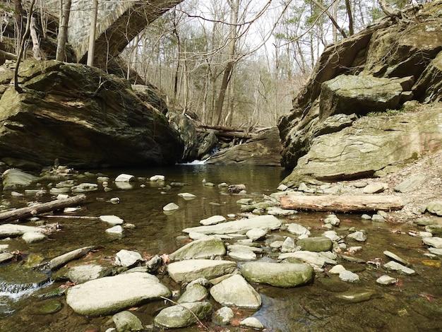 Panoramica di un fiume circondato da alberi spogli con molte rocce Foto Gratuite