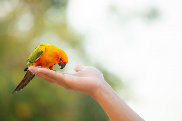 Pappagallo canino e uccello carino Foto Premium