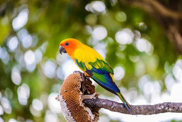 Pappagallo, pappagallo variopinto, pappagallo dell'ara, ara variopinto Foto Premium