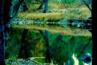 Parco nazionale di yosemite piante scaricare foto gratis for Cabine di alloggio del parco nazionale di yosemite