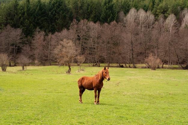 Pascoli verdi di allevamenti di cavalli. paese paesaggio estivo Foto Premium