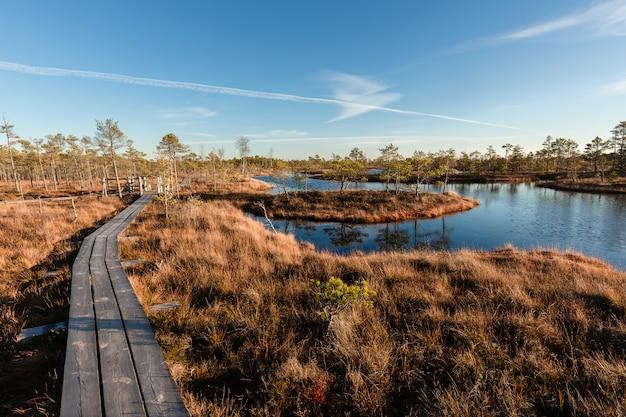 Passerella di palude sopraelevata. parco nazionale di kemeri in lettonia. estate. Foto Premium