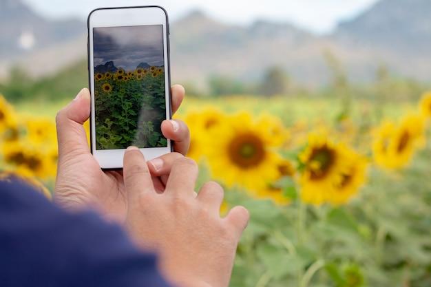 Passi con uno smartphone che prende la foto dei girasoli Foto Premium