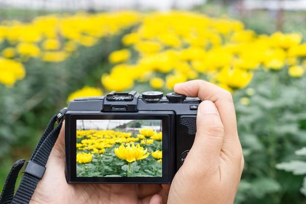 Passi la foto di presa di bei fiori con la macchina fotografica digitale mirrorless alla fattoria di fiore del crisantemo Foto Premium