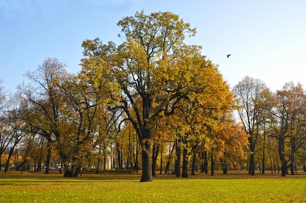 Peduncola le specie di querce autunnali nel parco mikhailovsky Foto Premium