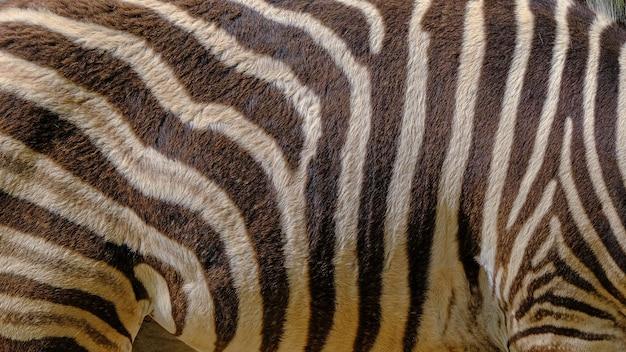 Pelle di zebra in una riserva naturale della fauna selvatica Foto Premium