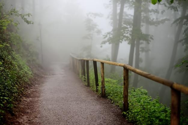 Percorso con recinzione in legno che attraversa una misteriosa foresta nebbiosa buio Foto Premium
