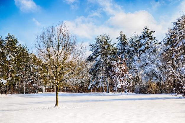 Percorso innevato in diversi alberi in una foresta Foto Premium