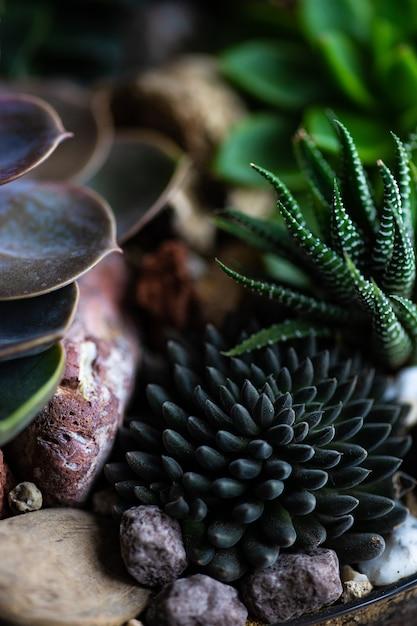Perle von nurnberg Foto Premium
