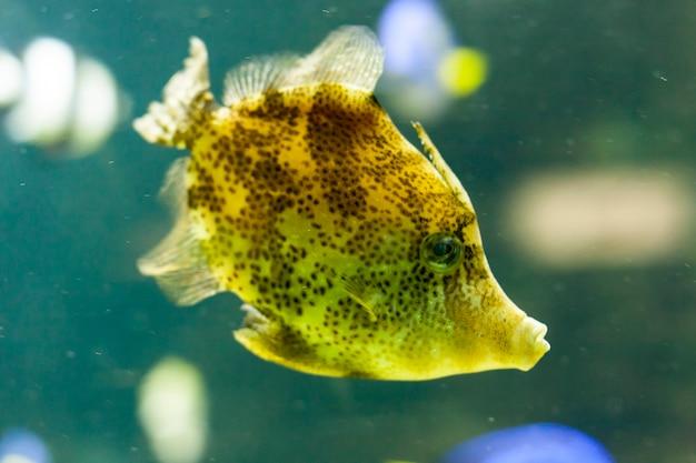 Pescare in acquario Foto Premium