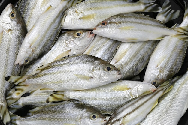 Pesce crudo di trombettiere o grunter di ingredienti per cucinare. Foto Premium