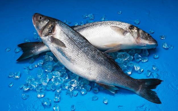 Pesce della spigola su ghiaccio sul blu Foto Premium