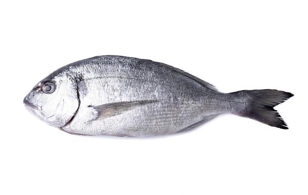 Pesce fresco su bianco Foto Gratuite