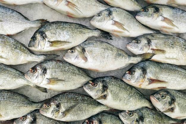 Pesce raffreddato fresco nelle file su ghiaccio in un deposito. ingrediente dietetico utile per la cena, una vetrina in un ristorante di pesce. Foto Premium