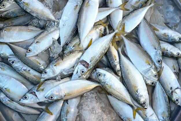 Pesce sgombro nel mercato Foto Premium