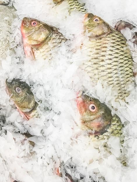 Pesci comuni di carpa scaricare foto gratis - Pesci comuni in tavola ...