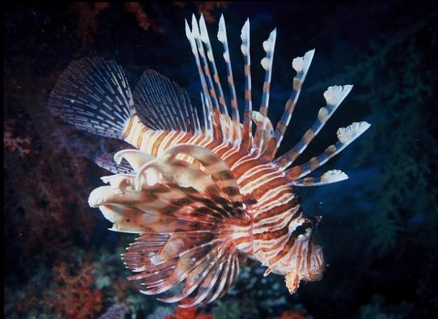 Pesci di acqua di mare leone leone oceano colorato Foto Gratuite