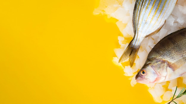 Pesci freschi che mettono su cubetti di ghiaccio Foto Gratuite